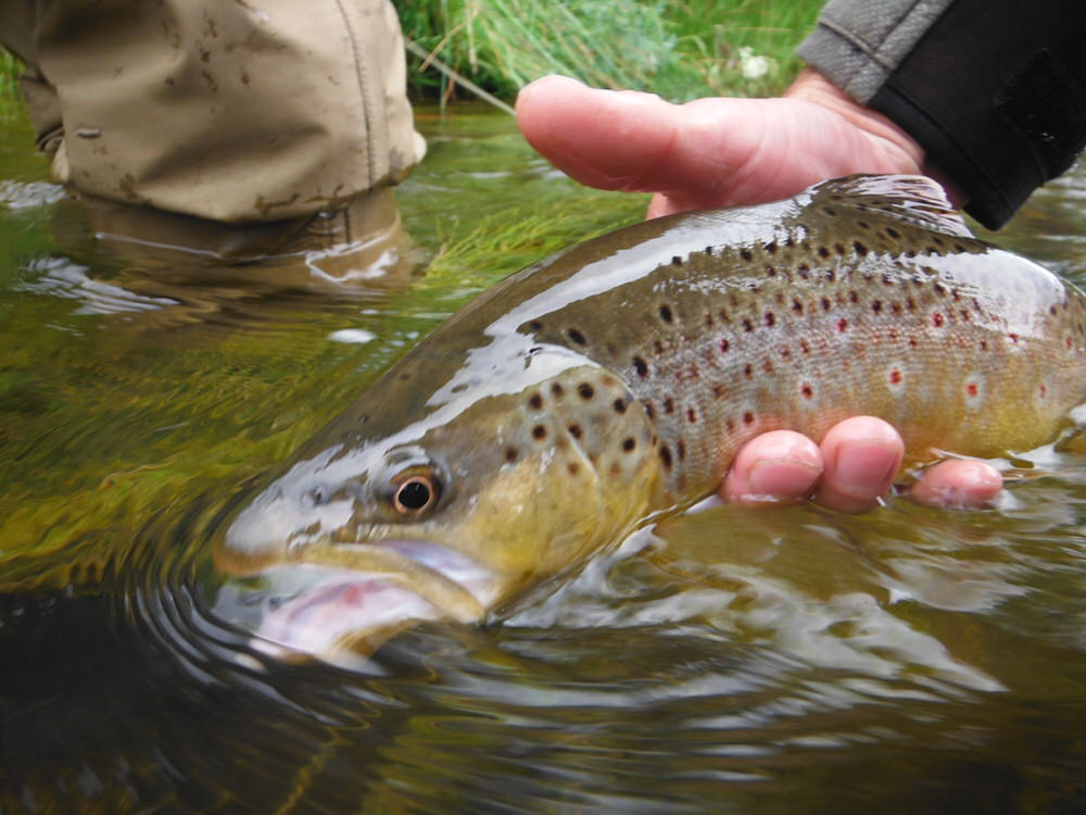 The Quiet Fly Fisher :: Southern Utah Fly Fishing Guide ...