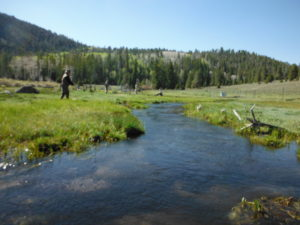 Quiet Fly Fisher fly fishing