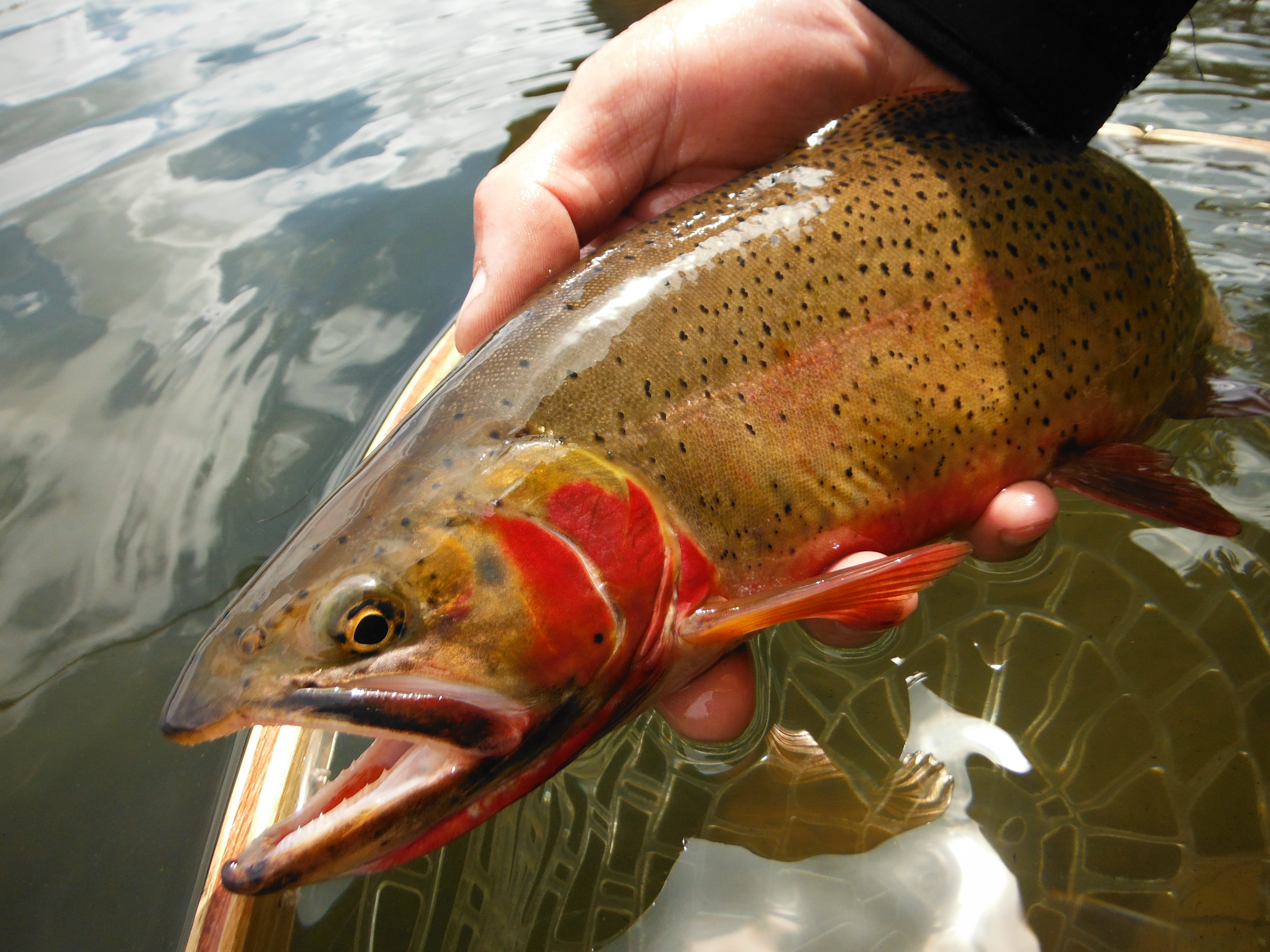 The quiet fly fisher southern utah fly fishing guide for Utah fly fishing report