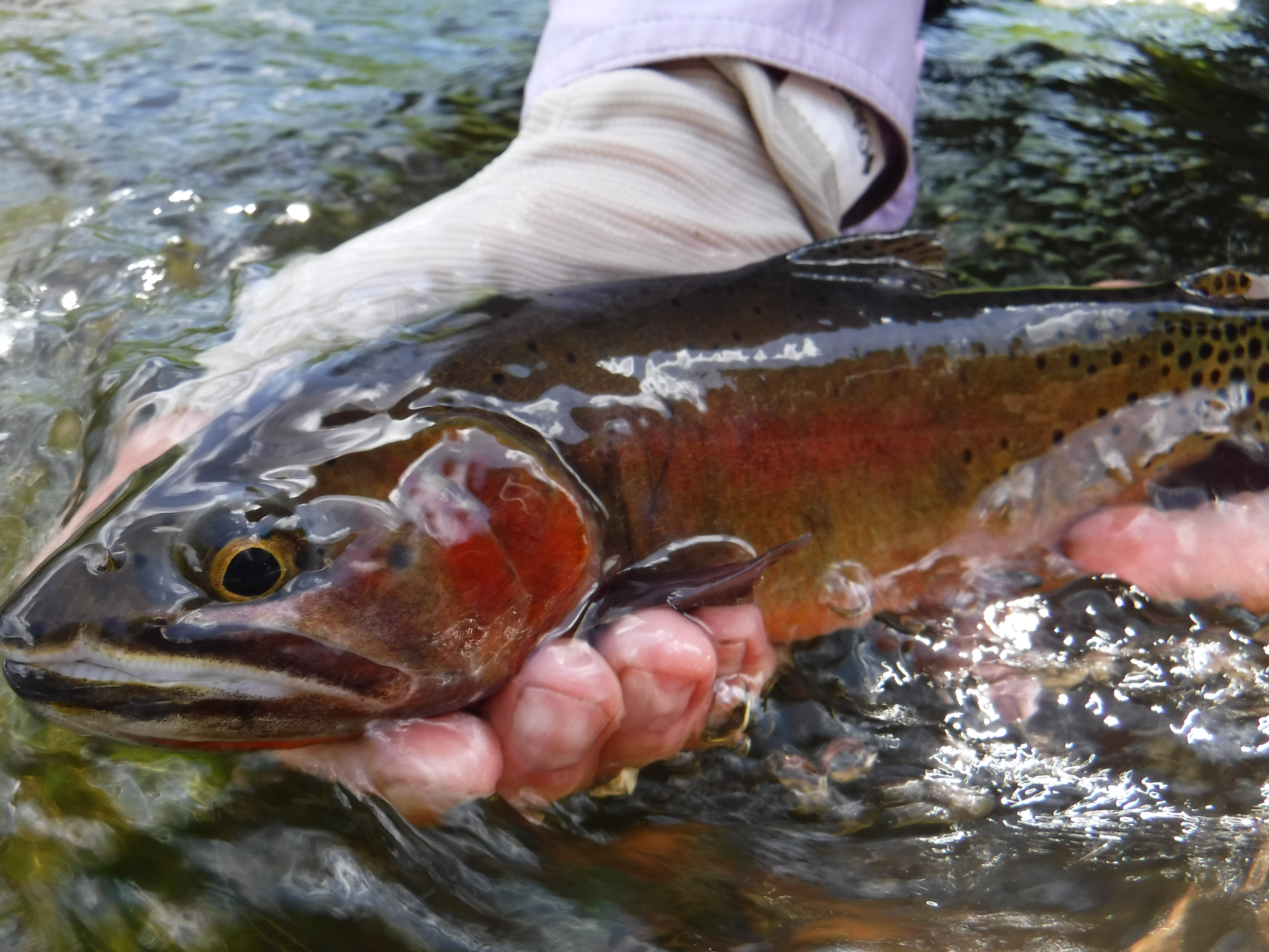 The quiet fly fisher southern utah fly fishing guide for Utah fishing regulations